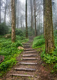 Forest path. Forest misty stairs. Secret path Royalty Free Stock Photos