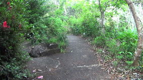 The Forest Path. Moving shot on a secluded bush path in a rainforest stock footage