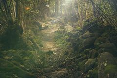Forest, Path, Mystical, Rocks Royalty Free Stock Images