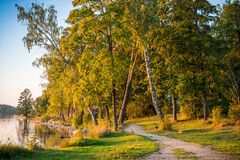 Forest path near lake Royalty Free Stock Images