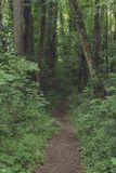 Forest path near Schwabisch Hall, Germany royalty free stock image