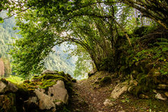 Forest Path. A path nestled in the forest accompanied by sounds and animal noises Stock Photography