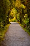 Forest Path, New Zealand Stock Photos