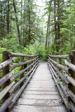 Forest path mountain trail Royalty Free Stock Photo