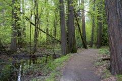 Forest Path på en vårdag Arkivfoto
