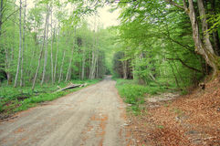 Forest path panorama Royalty Free Stock Images