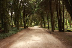 Forest path Panorama Royalty Free Stock Photos