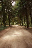 Forest Path Panorama Royalty Free Stock Image