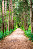 Forest path. Pathway between trees in rouge-hill park Stock Images