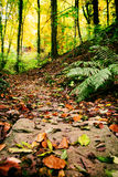 Forest Path pierreux Photo stock