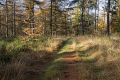 Forest path with pines Loenermark Royalty Free Stock Images