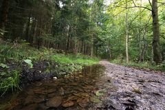 Forest path with puddle. Wet forest path with large puddle in the side seen from low angle in early autumn Stock Photos