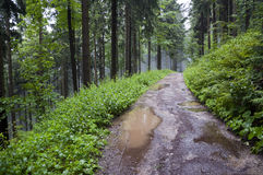 Forest path after rain Stock Images