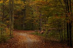 Forest path on a rainy autumn day in the Tricity Landscape Park,. Gdansk, Poland Royalty Free Stock Images