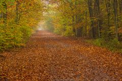 Forest path on a rainy autumn day in the Tricity Landscape Park,. Gdansk, Poland Stock Images