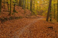 Forest path on a rainy autumn day in the Tricity Landscape Park,. Gdansk, Poland Stock Photos