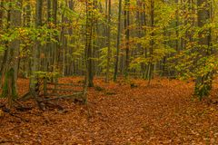 Forest path on a rainy autumn day in the Tricity Landscape Park,. Gdansk, Poland Stock Photo