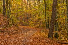 Forest path on a rainy autumn day in the Tricity Landscape Park,. Gdansk, Poland Stock Image