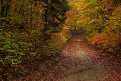 Forest path on a rainy autumn day in the Tricity Landscape Park,. Gdansk, Poland Royalty Free Stock Photos