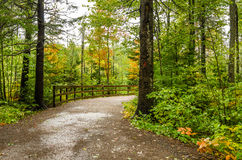Forest Path on a Rainy Day Royalty Free Stock Photography