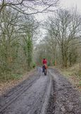 Forest path with rear view of lady in red riding a chestnut horse. Forest path in winter with a rear view of a lady wearing red jacket riding a horse royalty free stock image