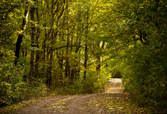 Forest path road Royalty Free Stock Images