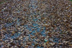 Forest path road with autumn leaf leaves. Season europe Royalty Free Stock Photo