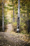 Forest path. Forest road leading through autumn forest focus in the foreground Royalty Free Stock Photo