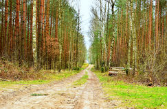Forest path. Forest road in the White Wilderness Stock Image