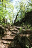 Forest path. Rocky path through forest with sunny, blue skies Royalty Free Stock Photo