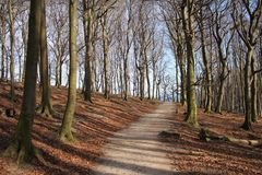 Forest Path on Ruegen. Quiet forest path on Ruegen Island in winter Royalty Free Stock Image