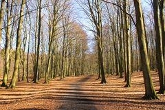 Forest path on Ruegen island. Lonely Forest Pathway on Ruegen Island, Germany Stock Photography
