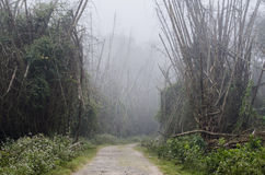 A forest path running through a misty bamboo forest Royalty Free Stock Photo