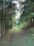 Forest Path schloss durch Kiefern ein lizenzfreies stockfoto
