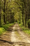 Forest path with shadow Stock Image