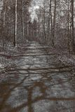 Forest path in soft sepia tone. royalty free stock images