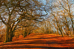 Tree lined path. Forest tree lined path through spooky bare Autumnal trees in a park Royalty Free Stock Photo