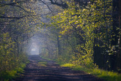 Forest path in spring Stock Photos