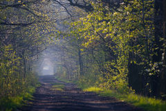 Forest path in spring Stock Image