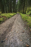 Forest path spruce forest Stock Image