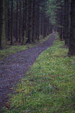 Forest path spruce forest Royalty Free Stock Photo