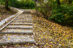 Forest path with stairs Stock Photography