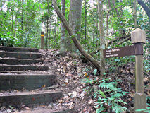 Forest path. Steps of a stairway next to a signpost leading to Jungle Fall Path in Bukit Timah nature reserve in Singapore Stock Photo