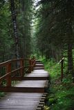 Forest path with steps Stock Photography