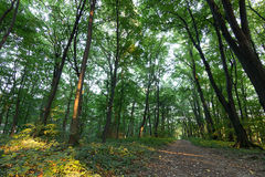 Forest Path Summer Forest com verde folheia caminho através das madeiras das árvores de floresta do verão Luz solar em Forest Sum imagens de stock royalty free