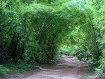 Forest Path. A path in the forest in summer, Kanchanaburi, Thailand, Bambo Forest, road motocycle path, camping Stock Photography