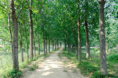 The forest path Stock Photography