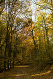 Forest Path Sunbeams through Autumn Forest with Leafs Changing Color Royalty Free Stock Image