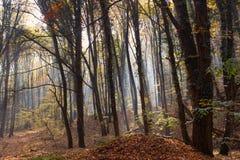 Forest Path Sunbeams durch Autumn Forest mit den Blättern, die Farbe ändern lizenzfreie stockfotografie
