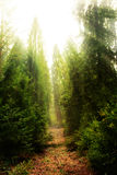 Forest path at sunny day Royalty Free Stock Image